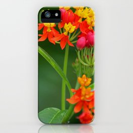 Taking Chances iPhone Case