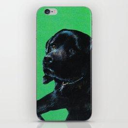 Black lab on green iPhone Skin