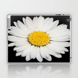Nine Common Daisies Isolated on A Black Backgound Laptop & iPad Skin