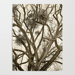Leafless Tree in Winter I Poster