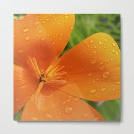 california poppy V Metal Print