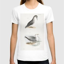 269 American Gannet young (Sula americana) 270 Winter Gull (Larus argentatus)  from Zoology of New Y T-shirt