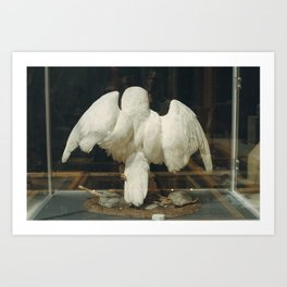 Natural History Museum, Oxford Art Print