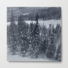 Winter 14 Metal Print