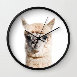 Baby Alpaca, Llama, Baby Animals Art Print By Synplus Wall Clock