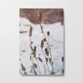 Plants in the snow Metal Print
