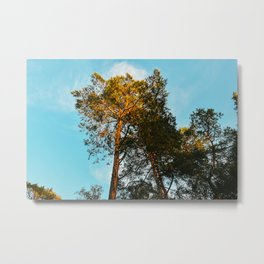 Blue clear sky in Ibiza | nature and tree photography | mindful peaceful fine art print Metal Print