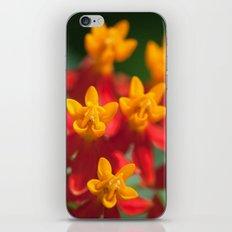 Exotic Flower  411 iPhone & iPod Skin