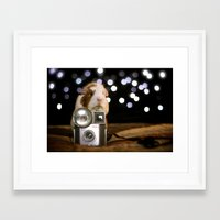 guinea pig Framed Art Prints featuring Guinea Pig Photographer  by The Wheekly