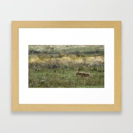Coyote on the Prowl No. 2 Framed Art Print