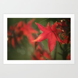Evergreen tree in the fall Art Print