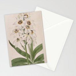 Flower 315 ornithogalum revolutum Revolute flowered Star of Bethlehem13 Stationery Cards