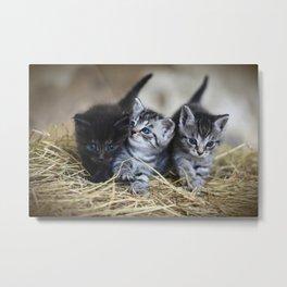 Cat Young Animal Kitten Metal Print