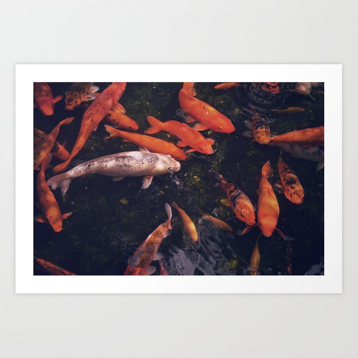 Temple Koi Fish Art Print