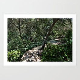 Photo California USA San Juan Capistrano Nature Parks Bush park Shrubs Art Print