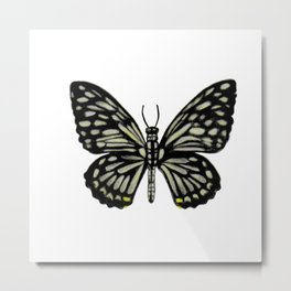 Common Mime Butterfly Metal Print