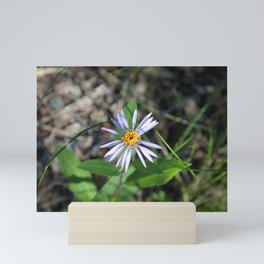 Arctic Aster in the Summertime Mini Art Print