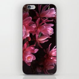 Pink Cactus Blossoms iPhone Skin