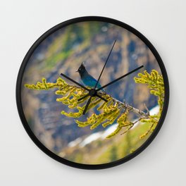 Steller's Jay (Canadian Blue Jay) in the forest Wall Clock
