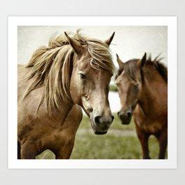 Garden horse Art Print