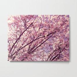 Pink Lavender Blossoms. Metal Print