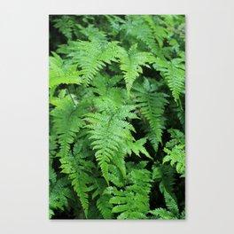 Ferns. Canvas Print