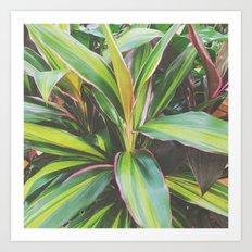 Foliage II Art Print