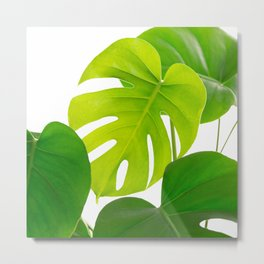 Beautiful Large Green Monstera Leaves On A White Background Fresh Mood #decor #society6 #buyart Metal Print