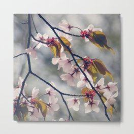 cherry blossom 02 Metal Print