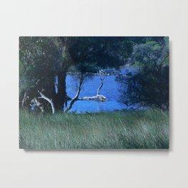 Black Swan Lake Metal Print