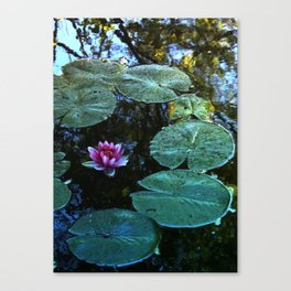 Lilypad Canvas Print