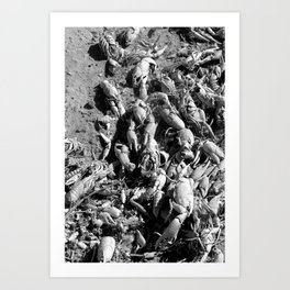 Crayfish Shells Art Print