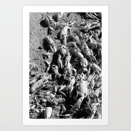 Crayfish Shells Art Print