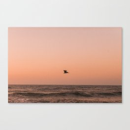 Lone Pelican at Sunrise Canvas Print