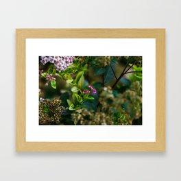Lovely Garden In The Springtime Framed Art Print