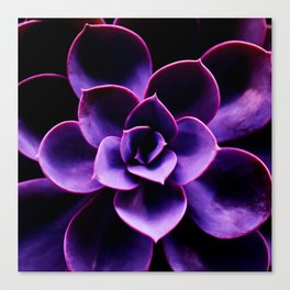Ultraviolet Succulent Plant #decor #society6 #homedecor Canvas Print
