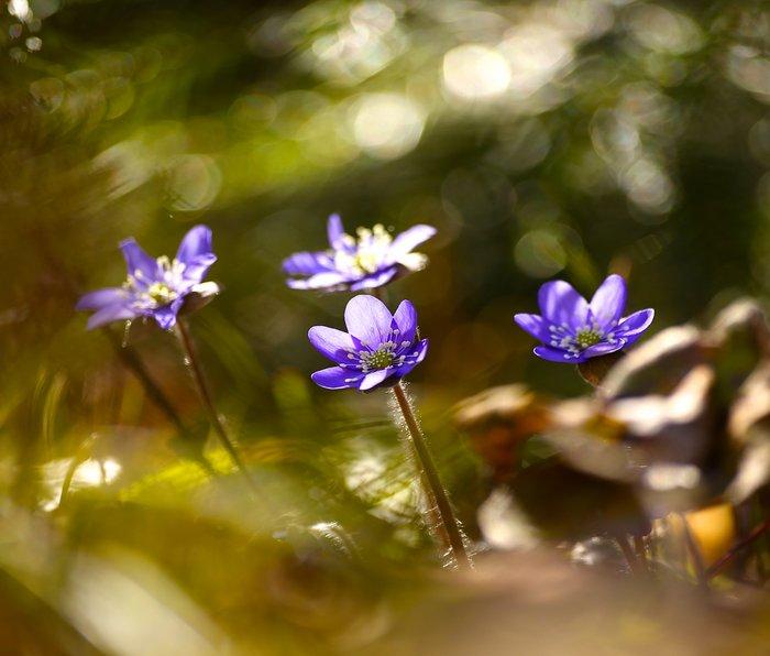 Beautiful Surprise In Spring Forest Metal Travel Mug