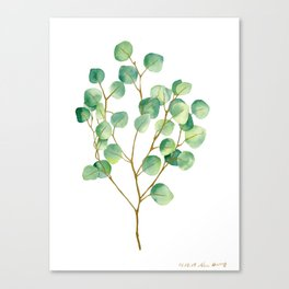 Eucalyptus 1 Canvas Print