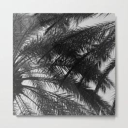 Palm Tree Upshot In Noir Fine Art Photo Metal Print