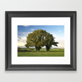 Two Trunk Tree Framed Art Print