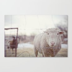 well hello Canvas Print