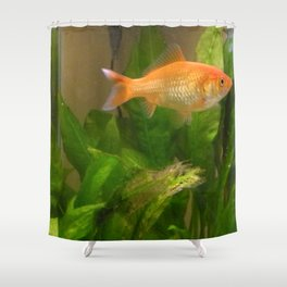 Goldie the Goldfish Shower Curtain