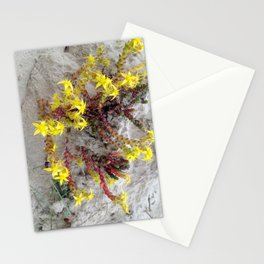 HAIRY COLLECTION (24) Stationery Cards