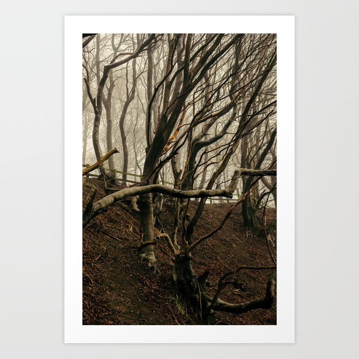 ENCHANTED FOREST / 01 Art Print