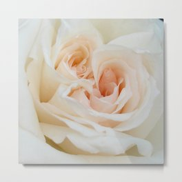 Close Up View Of A Beautiful White Rose Metal Print