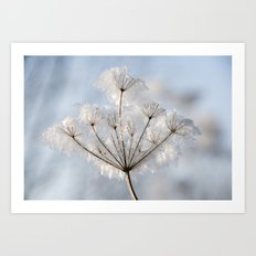 Queen Anne's Lace covered with Winter Frost. Art Print