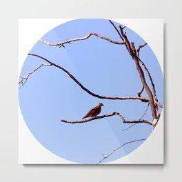 Pássaro Metal Print