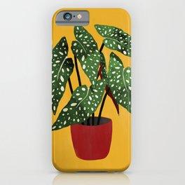 Begonia maculata pot watercolor iPhone Case