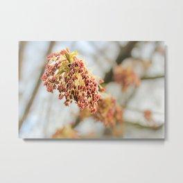 Young tree seeds. Metal Print
