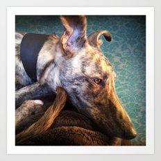 Greyhound Lurcher Art Print